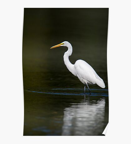 Light Bright White Egret  Poster