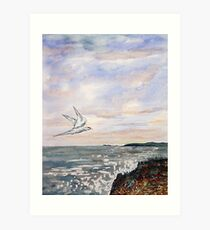 Common Tern at Benderloch Scotland Art Print