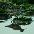 Wood Sandpiper by Russell Couch