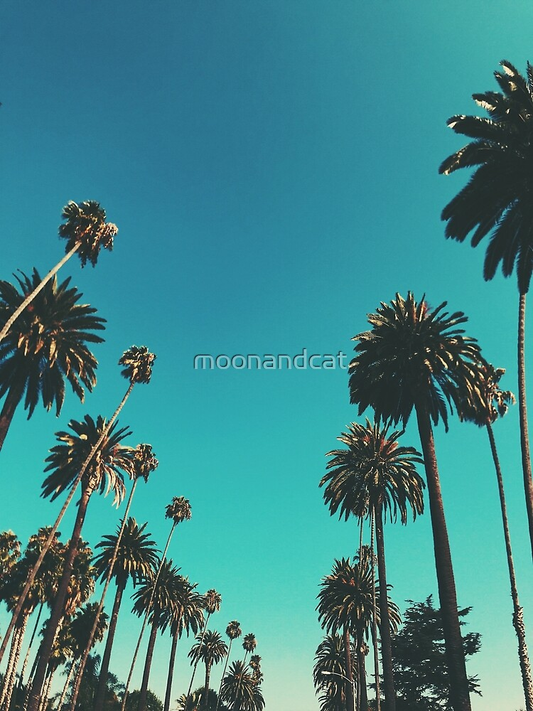 Los Angeles Palm Trees by moonandcat