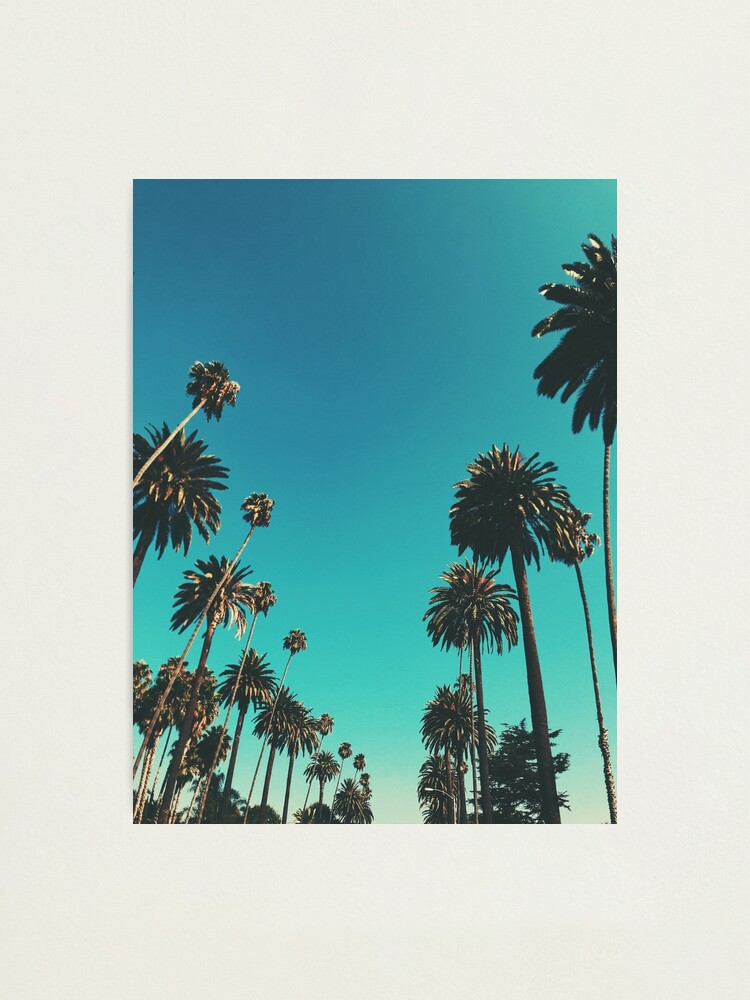 Alternate view of Los Angeles Palm Trees Photographic Print