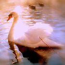 A Sun-lit Swan by Brian Bo Mei