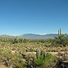 Arizona by travelingdixie