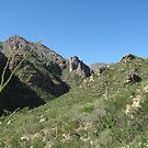 Sabino Canyon by travelingdixie
