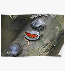Turttle and Butterfly Poster