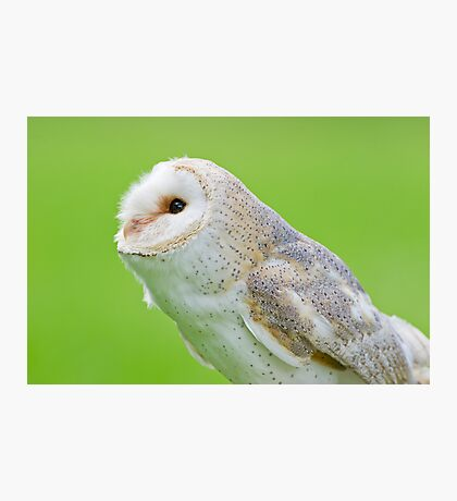 Pointer Owl  Photographic Print