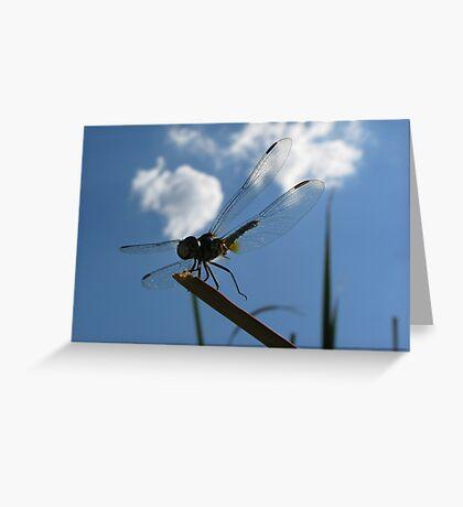 Dragonfly High  Greeting Card