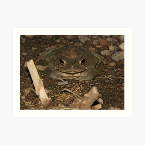Sonoran Desert Toad (a.k.a Colorado River Toad) Art Print