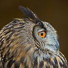 Eagle Owl Profile by Daniel  Parent