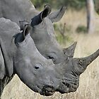 Mom white rhino and adolescent child! by Anthony Goldman
