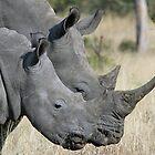 Mom white rhino and adolescent child! von Anthony Goldman