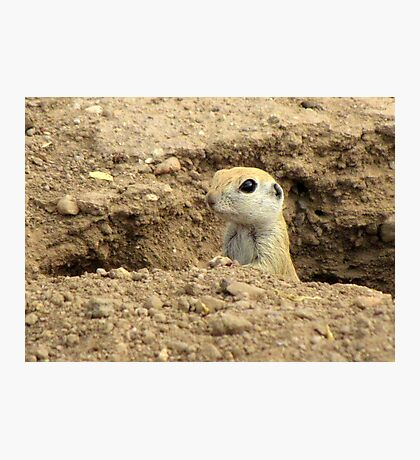 Round-tailed Ground Squirrel ~ Peek-a-boo Photographic Print