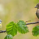 Blue Tit & Chaffinch by M S Photography/Art