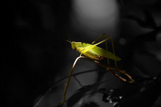 Grasshopper in Black and white background by vasu