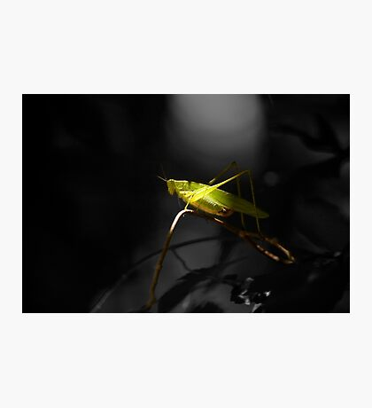 Grasshopper in Black and white background Photographic Print