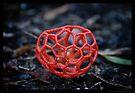 Red Cage Fungus  by Carol Knudsen