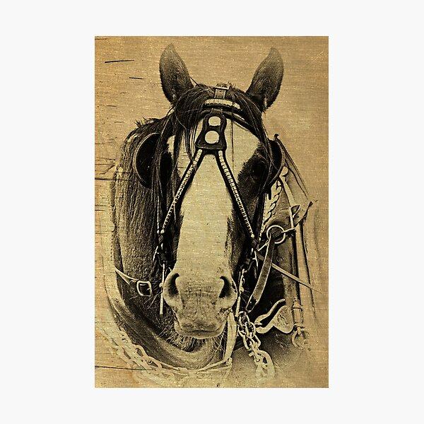 Heavy Horse Photographic Print
