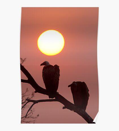 Vulture Sunset Poster