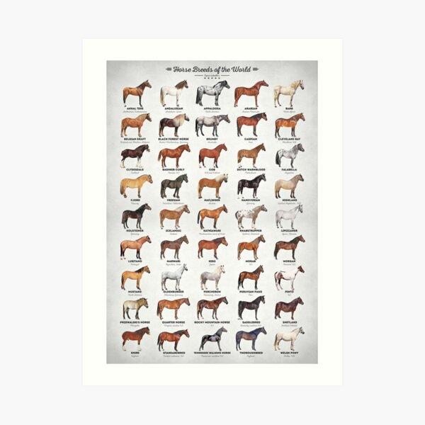 Horse Breeds Of The World Art Print