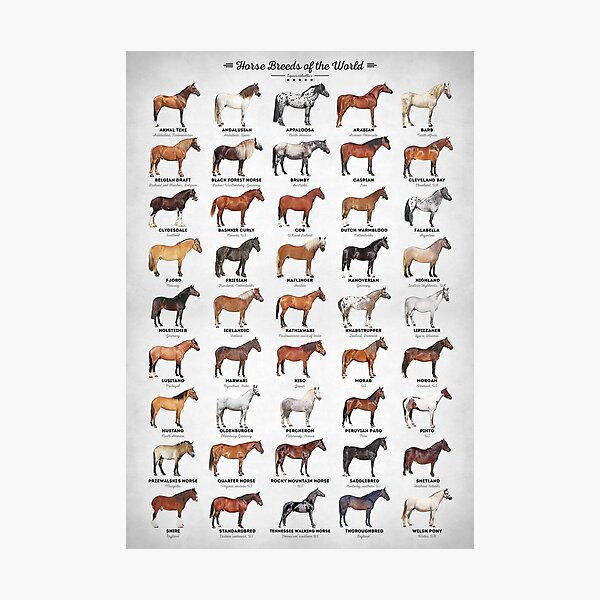 Horse Breeds Of The World Photographic Print