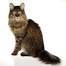 Regal Cat by RandiScott