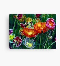 poppies, poppies, poppies Canvas Print