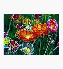 poppies, poppies, poppies Photographic Print