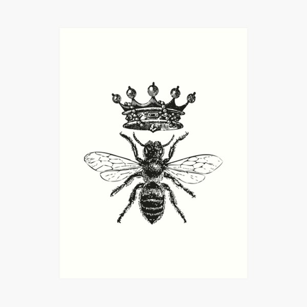 Queen Bee | Vintage Honey Bees | Black and White |  Art Print