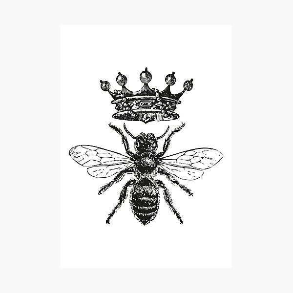 Queen Bee | Vintage Honey Bees | Black and White |  Photographic Print