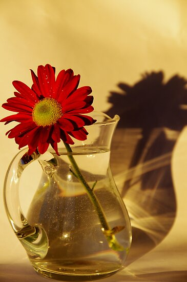 My shadow and I by Brian Edworthy
