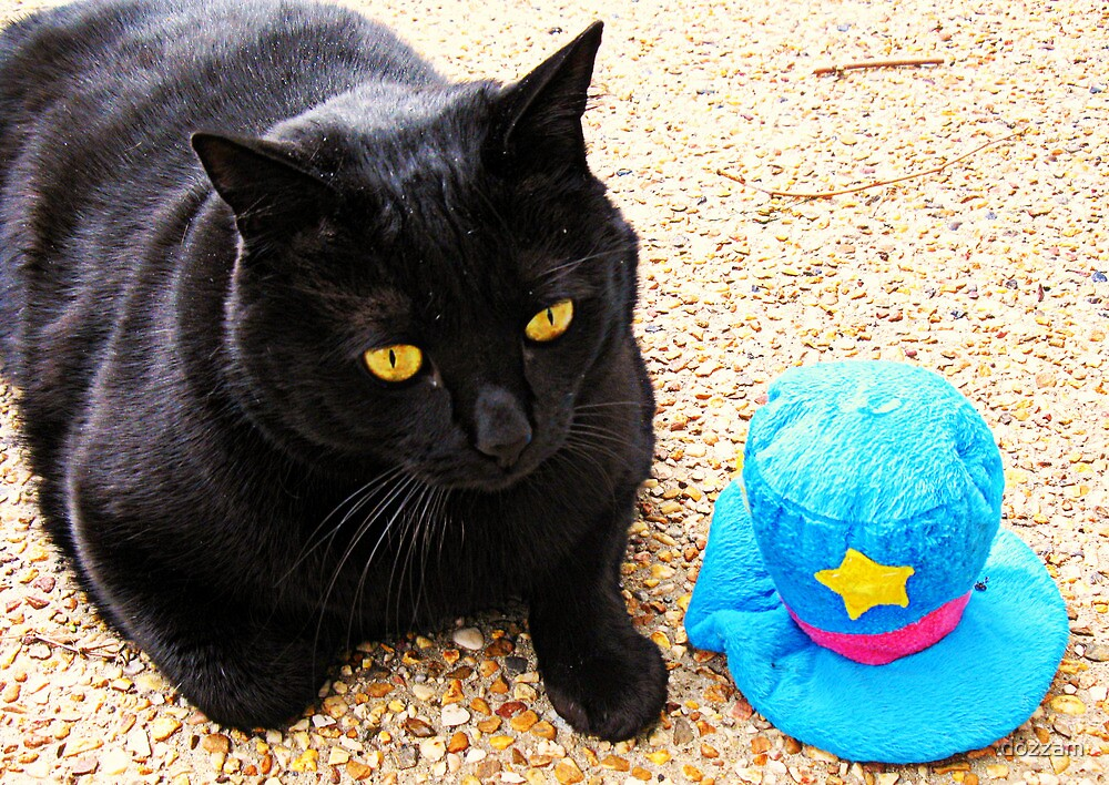 The cat and the blue hat by dozzam
