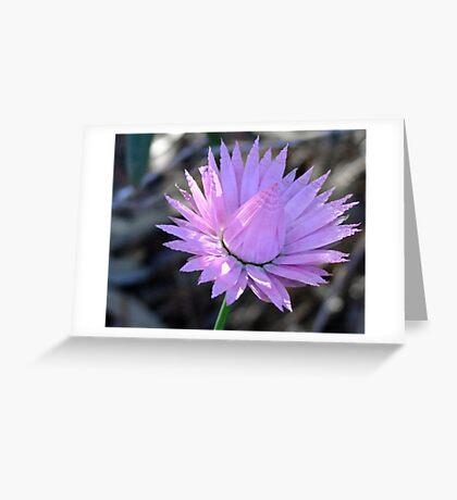Pink Frills - Taken in Kings Park, Perth, Western Australia Greeting Card