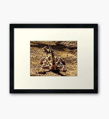 Thorny Mountain Devil - Mount Matilda, Western Australia Framed Print