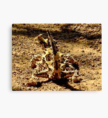 Thorny Mountain Devil - Mount Matilda, Western Australia Canvas Print
