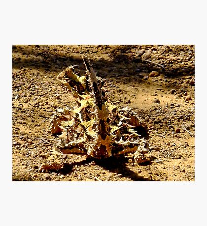 Thorny Mountain Devil - Mount Matilda, Western Australia Photographic Print