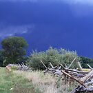 Terror Comes Like a Storm by Kelly Chiara