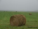 Hay Bales in the Fog by Barberelli