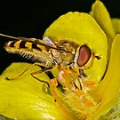 Pollination 14 by Gareth Jones