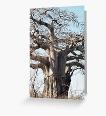 Boabab Tree Greeting Card