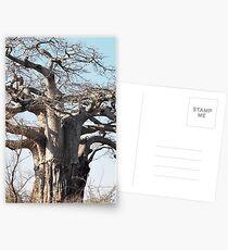 Boabab Tree Postcards