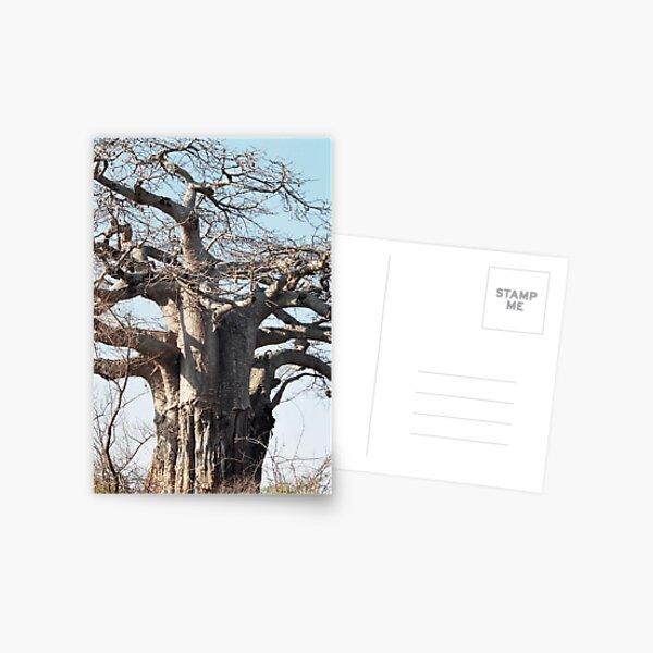 Boabab Tree Postcard