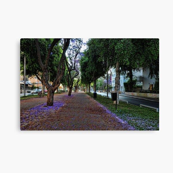a purple spring foliage, Tel Aviv Canvas Print