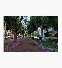 a purple spring foliage, Tel Aviv Photographic Print