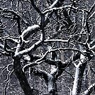 tangled up in snow by brian gregory