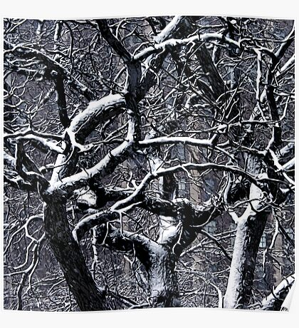 tangled up in snow Poster