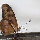 Butterfly by tabusoro