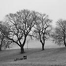Trees In The Mist by Lynne Morris