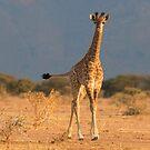 Baby Giraffe by Marie Holding
