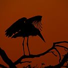 Marabou Stork Silhouette by Marie Holding