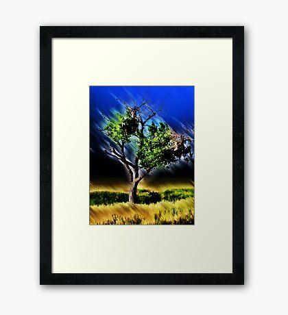 texas tree Framed Print